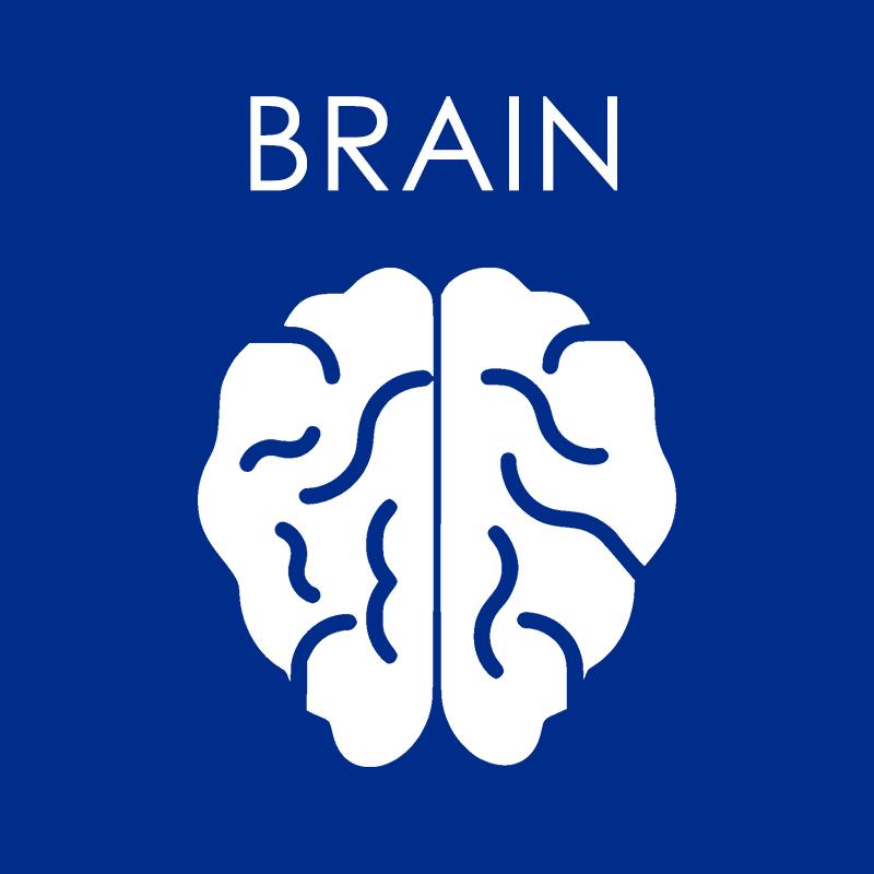 Brain Supplements